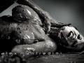 Nude Photography